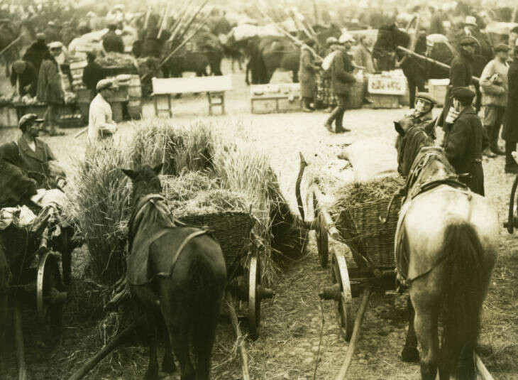 Pinsk monthly market. The hay section. October 3, 1934