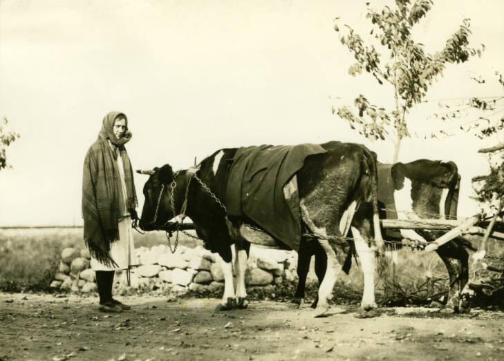 14 miles southeast of Grodzisk. Woman leading cow hauling wagon load of branches for winter firewood. 12 noon. October 30, 1934