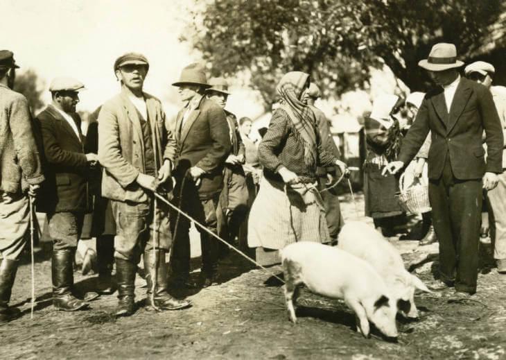 hogs at Zolochiv market, 1934