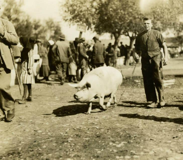 man with pig at Zolochiv market in Ukraine 1934
