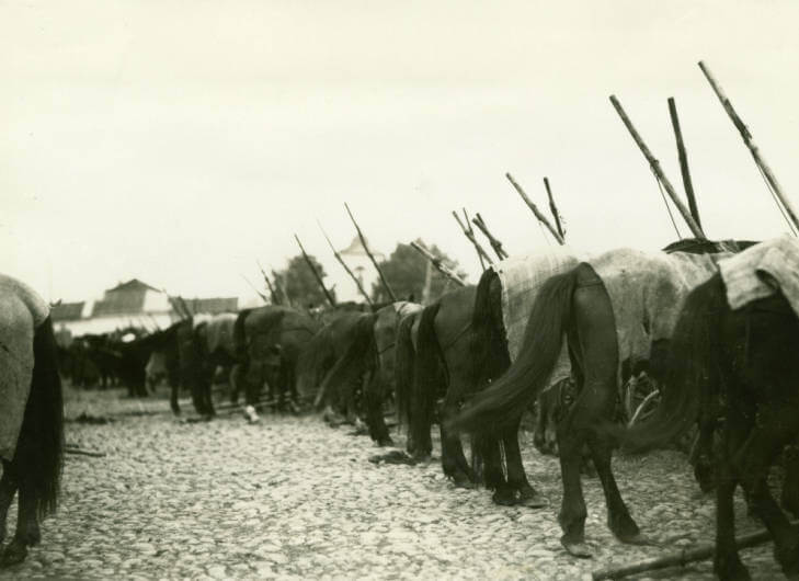 parked horses at Pinsk market 1934, present day Belarus