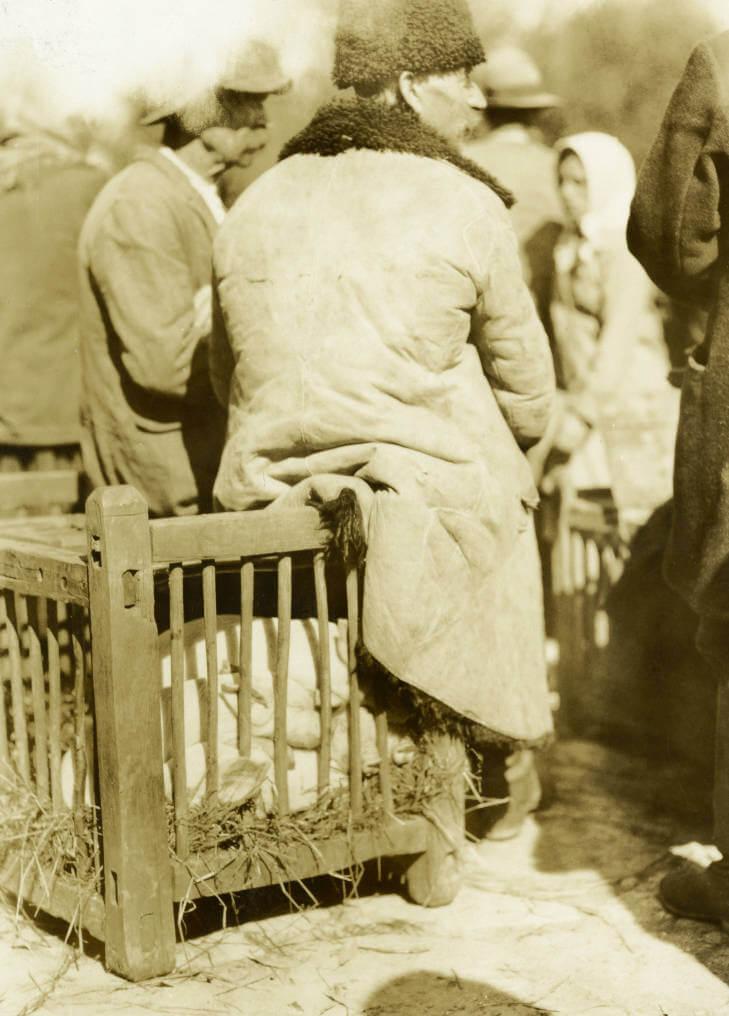 piglets sold at Zolochiv market in 1934 Ukraine